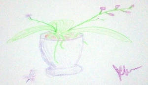 Colored Pencil sketch of Orchids in a Pot
